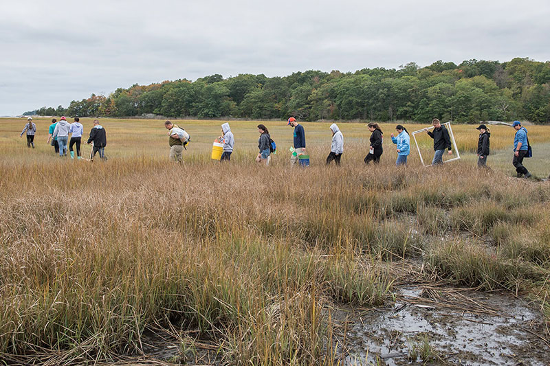 Students walking through a boggy marsh